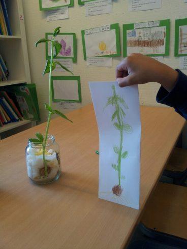 Onderzoek van groep 6 in het thema 'We hebben een tuin' - schooljaar 2014-2015
